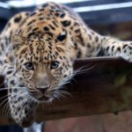 LeoPARDS Trial